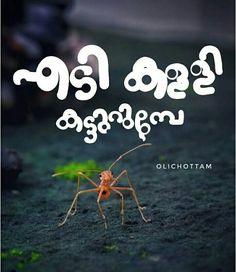 Malayalam Quotes, Typography Quotes, Betta Fish, Personality Types, Happy Sunday, Qoutes, Planets, Lyrics, Animals Planet