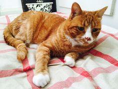 Kimi - www. Cats, Animals, Cat Food, Dog Food, Farm Animals, Gatos, Animales, Animaux, Kitty