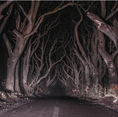 Floresta sombria Irlanda do Norte Art Papillon, Southern Gothic, Chef D Oeuvre, Northern Ireland, Dark Art, Aesthetic Pictures, Les Oeuvres, The Darkest, Scary