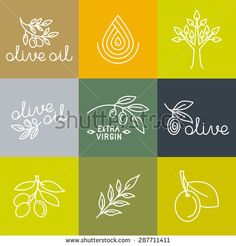 Vector olive oil icons and logo design elements in trendy linear style - mono line illustrations and concepts for packaging of extra virgin olive oil and fresh farm products - stock vector