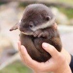 fluffy otter