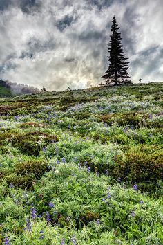 Wildflowers Of Mount Rainier by Pierre Leclerc Photography Mount Rainier National Park, Foggy Morning, Washington State, Wildflowers, Beautiful World, Acre, National Parks, United States, Mountains