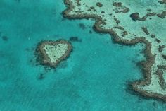 Heart Reef in #OurWorldHeritage Great Barrier Reef is a stunning composition of coral that has naturally formed into the shape of a heart. Best seen from a seaplane an amazing experience  #greatbarrierreef #heart #heartreef #australia #unescoworldheritage #WorldHeritage by lp_on_tour http://ift.tt/1UokkV2