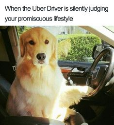 To illustrate the vast spectrum of possible Uber experiences, people are using funny animal pictures, and the memes they create are so on-point. Cute Dog Memes, Crazy Funny Memes, Funny Animal Memes, Wtf Funny, Funny Dogs, Cute Dogs, Funny Animals, Cute Animals, Hilarious