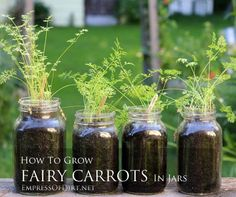 How to grow adorable fairy carrots in jars - lots of fun for kids.