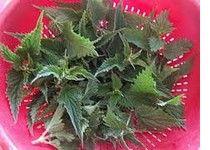 L'ortie est un engrais naturel qui est une plante dont les nombreuses caractéristiques la propulse de loin en avant pour la réussite de votre jardin.