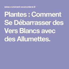 Plantes : Comment Se Débarrasser des Vers Blancs avec des Allumettes.