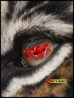 Eye of the tiger, baby. Can't wait for this weekends game!!