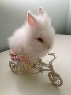 ☆ bunny <3