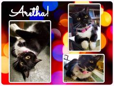 Cats for Adoption: Name Your Price For These Eligible Cats!