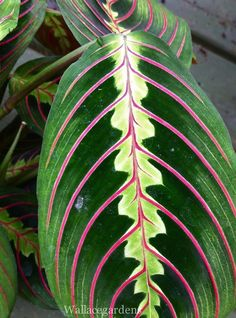 Low light areas? Use Maranta, also known as the Prayer Plant. Several foliage patterns to choose from.