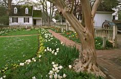 """Colonial Williamsburg - """"The colonists tended to create the gardens they remembered, or their parents remembered, in the England of William and Mary. Consequently, these styles persisted longer in America . . . than in England."""""""