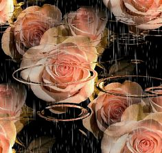 The perfect Roses Animated GIF for your conversation. Discover and Share the best GIFs on Tenor. Beautiful Flowers Wallpapers, Beautiful Roses, Pretty Flowers, Roses Gif, Raindrops And Roses, I Love Rain, Animated Gifs, Autumn Rain, Amazing Gifs