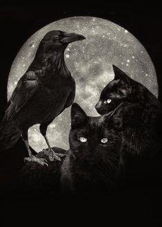 Tattoo Mond, Gothic Wallpaper, Black Cat Art, Raven Art, Vampire, Witch Art, Halloween Cat, Halloween Ideas, Cat Tattoo