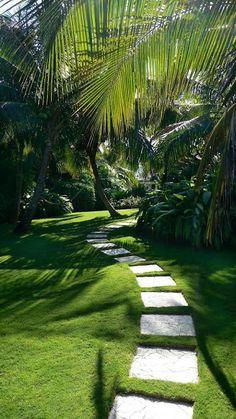 modern architecture - craig reynolds landscape architect - carribbean garden - exterior view - tropical garden - Gardens And Thyme Tropical Garden Design, Tropical Landscaping, Modern Landscaping, Garden Landscaping, Landscaping Design, Tropical Gardens, Backyard Walkway, Backyard Ideas, Privacy Landscaping