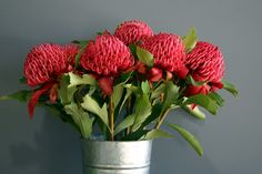 Waratahs are stunning flowers, but only available for a short season. Australian Wildflowers, Australian Native Flowers, Australian Plants, Australian Bush, Amazing Flowers, Beautiful Flowers, Beautiful Images, Beautiful Things, Waratah Flower