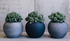 What you're looking for, is Crassula 'Blue Bird'. Garden Beds, Home And Garden, Jade Plants, Echeveria, Drought Tolerant, Rosettes, Blue Bird, Planter Pots, Succulents