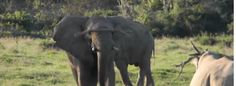 Watch: Elephants throwing things at rhinos is apparently a thing [video] #savedfor later #feedly https://www.thesouthafrican.com/watch-elephants-throwing-things-at-rhinos-is-apparently-a-thing-video/
