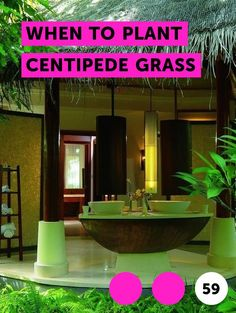 When to Plant Centipede Grass. Centipede grass, originally a native of southeast Asia, is a low-maintenance grass ideally suited to warm and temperate climates. Although this grass is not easily susceptible to disease, it may require a little extra work when planted outside of its ideal conditions of acidic and sandy soil in warm or temperate...