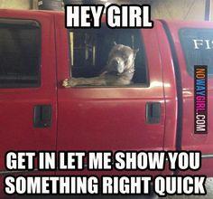 internet dog meme | Funny Dog Memes: Hey Girl Get In Let Me Show You Something - NoWayGirl