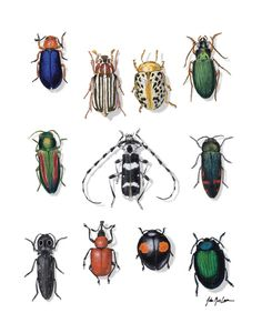 beautiful beetles | Published June 10, 2012 at 400 × 510 in Natural History Prints