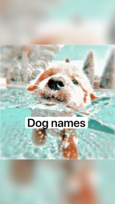 Super Cute Puppies, Cute Baby Dogs, Cute Little Puppies, Cute Funny Dogs, Cute Dogs And Puppies, Cute Little Animals, Cute Funny Animals, Doggies, Cute Animal Names