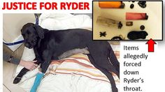 PETITION UPDATE URGENT - PLEASE SIGN FOR ABUSED DOG RYDER
