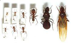 Sur la piste des fourmis... des insectes formidables. Dossier, vidéo, jeux pour comprendre les fourmis et fabriquer une fourmilière.