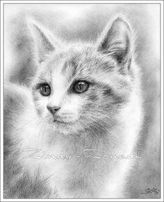 Kitten by *Zindy on deviantART