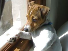 Meet Ozzy with the Jack Russell Photos Sent to us by Lyndsay in Scotland