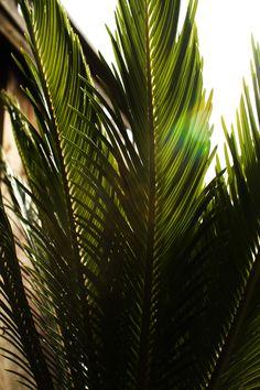Palm & Sun.