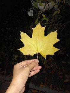 Осень. Жёльтая