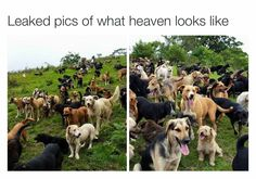 Leaked pictures of what Heaven looks like;)