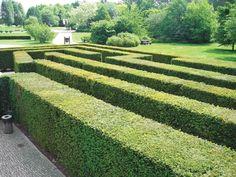 BuckeyeGardening.com- Plants as Hedges