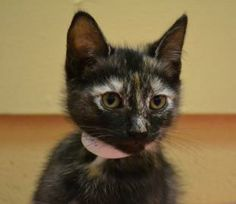 Freckles is a cute little girl. She is only 3 months old and is in need of a good home.