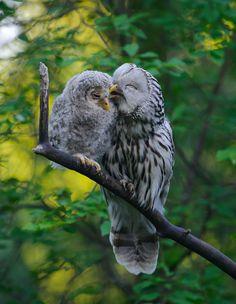 L'Instinct parental des Oiseaux (6)