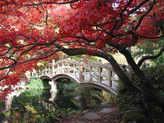 Beautiful Japanese garden at Hatley Castle