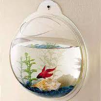 fish bowl on wall