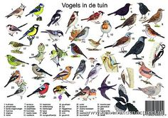 Vogels in de tuin Beautiful Birds, Beautiful Gardens, Bird Types, Garden Animals, Forest School, Fauna, Illustrations, Bird Watching, Pet Birds