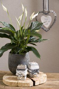 #Grijs is altijd een goede basis voor welke ruimte in huis dan ook. Fris, ruimtelijk en toch heel warm als je deze #woonstijl aanvult met bont, stoer hout en mooie grijze #planten. Grijs is wow!