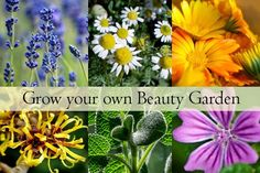 Growing a Beauty Products Garden: Plants, Flowers, and Herbs that are beneficial in skincare