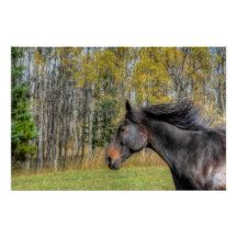 Galloping Black Horse, Horse-lover Equine Photo Perfect Poster