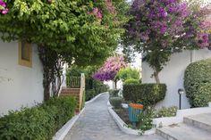 Beautiful and natural garden