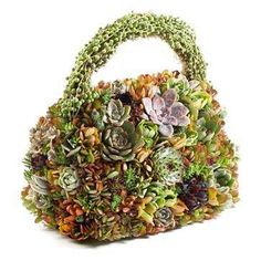 Succulent purse topiary