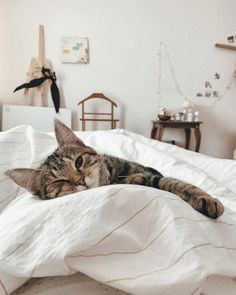 cat recipes monty the cat cats things cat base awesome cats cat and dog lost cat cat craft funny kitty cats cat tutorial guilty dogs laughing cat cat stuff furniture cat home ideas sheep cat Animals And Pets, Baby Animals, Cute Animals, Pretty Cats, Cute Cats, Photo Chat, Cat Photography, Cute Creatures, Crazy Cats