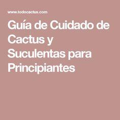 Guía de Cuidado de Cactus y Suculentas para Principiantes
