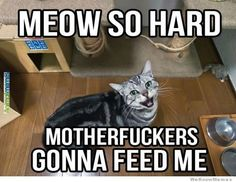 Cat memes Feed me!...