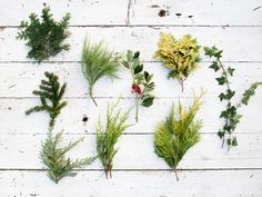 Evergreens and other natural materials foraged from the landscape can be used to make winter wreaths or Christmas holiday wreaths.