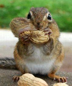Un piccolo scoiattolo ghiottone!!!