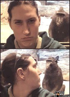 monkey photobomb2 Best Monkey Photobomb of All Time